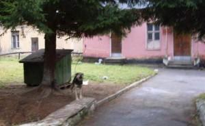 Dog-620x381